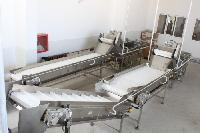 Fresh Fruit & Vegetable Cleaning, Sorting, Grading & Packing Line