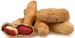 Peanut Kernel 04