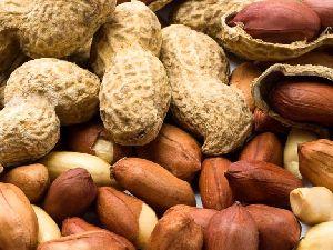 Peanut Kernel 05