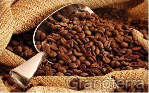Arabica Coffee Beans 01