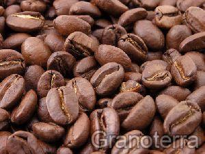 Arabica Coffee Beans 03