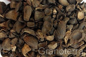 Palm Kernel Shell - PKS