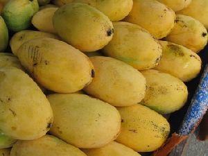 Fresh Dashehari Mango