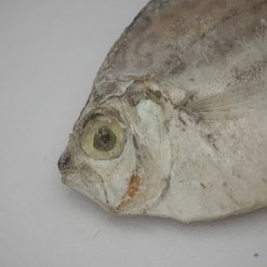 Dried Silver Belly Fish