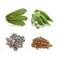 Ladyfinger Seeds