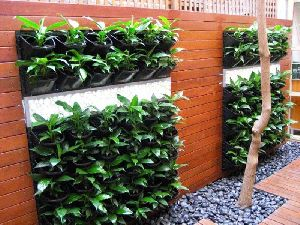 Vertical Gardening/ Green Wall