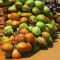 Tender Coconuts, Green Coconuts, Fresh Coconuts