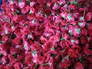 Fresh Red Rose Flowers