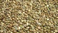 Green Robusta Coffee