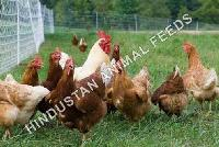 Organic Poultry Feeds