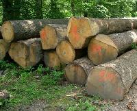Spruce Wood Logs