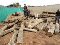 Sudan Teak Logs