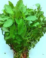 Chowali Sag Bhaji Green Seeds Amaranthus