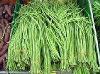 Yard Long Bean