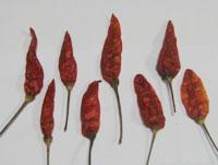 Bada Dana Dry Red Chilli