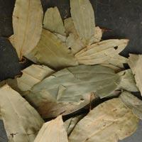 Dried Bay Leaves