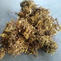 Moss Grass