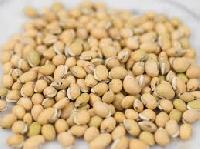 Dolichos Lablab Seeds (lablab Purpureus)