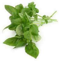 Organic Tulsi Leaves (Organic Ocimum Basilicum Leaves)