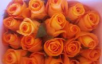 Tropical Amazon Rose
