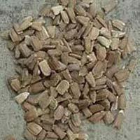 Bottle Gourd Seed