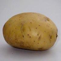 Kufri Chandramukhi Potato