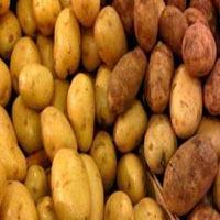 Kufri Chipsona Potato