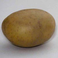 Kufri Jyoti Potato