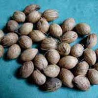 Areca Palm Seeds