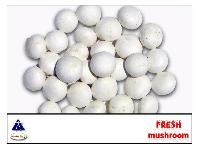 Fresh Packed Mushroom