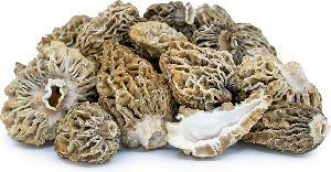 Dried Morels Mushroom