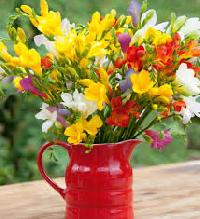 Freesia Flower Plant