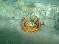 Willow Wicker Dustbin Basket