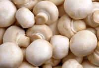 Fresh Button Mushroom