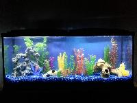 Aquarium Fish Tanks