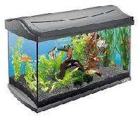 glass fish tanks