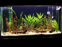 Natural Aquarium