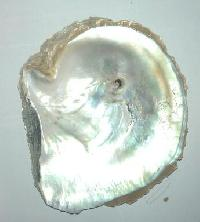 Sea Shells And Dried Sea Foods