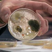 Bacteriological Agar Agar