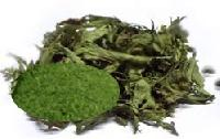 Stevia Dry Leaves Green Powder