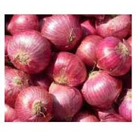Indian Fresh Onions