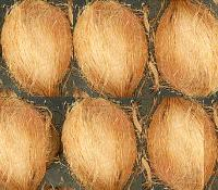 Semi Husked Coconuts