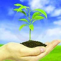 Total Bio Organic Fertilizer