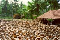 Coconut Waste