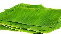 Paper Banana Leaf