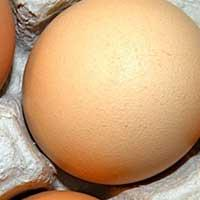 Brown Shell Poultry Eggs