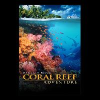 Coral Reef Adventure Story Book