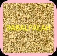 Seed Bajra