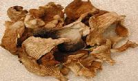 Dehydrated Oyster Mushroom