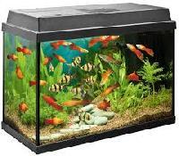Aquarium Fish Suppliers Manufacturers Traders In India